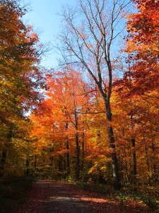 Iron River Mi Fall Colors